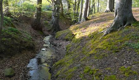 Grønnehave Bæk vil give nye naturområder