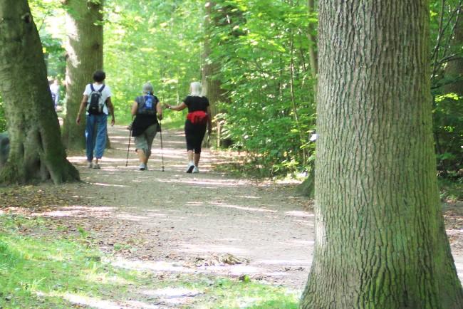 Halvmaraton for vandrere ved Egebjerg