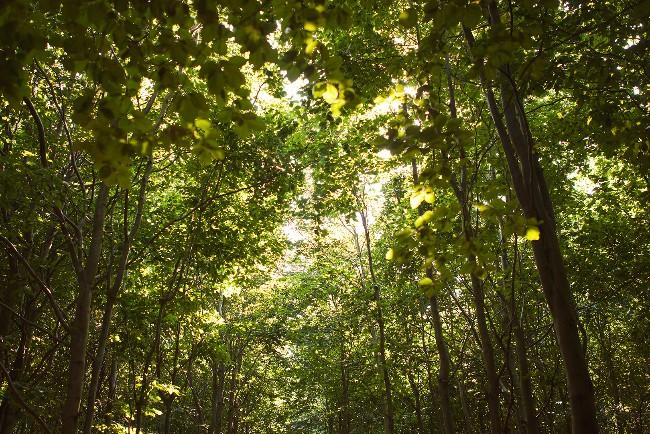 Nakke Skov blev en voksende succes