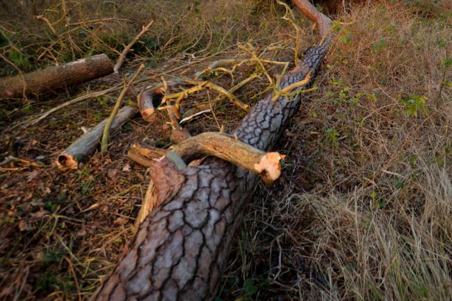 Væltede træer blokerede veje